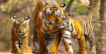 delhi jim corbett tour package by tempo traveller